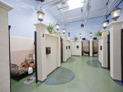 About Family pet Friendly Motels And Family pet Hotels